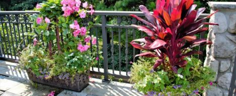 Potted plants with vibrant flowers